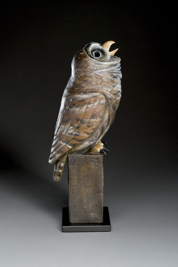 """""""Nocturnal Owl"""""""