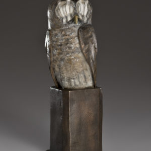 """""""Wounded Owl"""""""