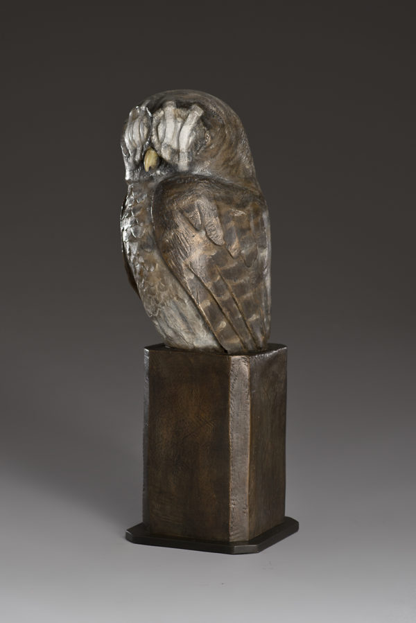 """Wounded Owl"""